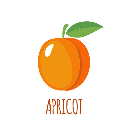 Apricot in flat style. Apricot vector logo. Apricot icon. Isolated object. Natural food. Vector illustration. Apricot on white background