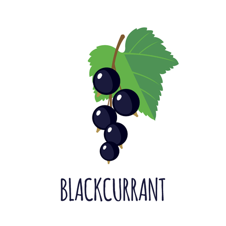blackcurrant: Blackcurrant in flat style. Blackcurrant vector logo. Blackcurrant icon. Isolated object. Natural food. Vector illustration. Blackcurrant on white background Illustration