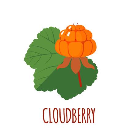 chicouté: Cloudberry in flat style. Cloudberry vector logo. Cloudberry icon. Isolated object. Natural food. Vector illustration. Cloudberry on white background