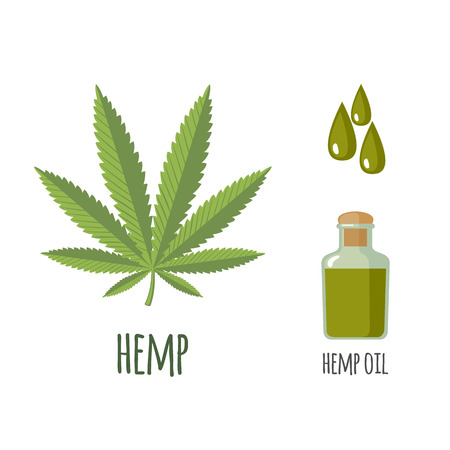 Superfood hemp set in flat style: hemp leaves, oil. Organic healthy food. Isolated objects on white background. Vector illustration Illustration