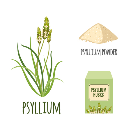 psyllium: Superfood psyllium set in flat style: psyllium grass, powder, husks. Organic healthy food. Isolated objects on white background. Vector illustration