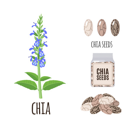 Superfood chia set in flat style: chia seeds, packaging. Organic healthy food. Isolated objects on white background. Vector illustration Illustration