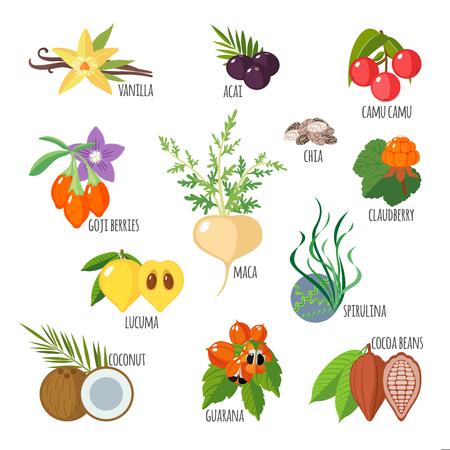 Superfoods in flachen Stil. Gesunder Lebensstil. Obst und Gemüse für die Gesundheit. Vektor-Illustration