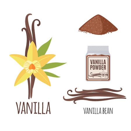 Supernahrungs Vanille Set in flachen Stil: Vanilleschoten, Blume, Pulver. Organische gesundes Essen. Isolierte Objekte auf weißem Hintergrund. Vektor-Illustration
