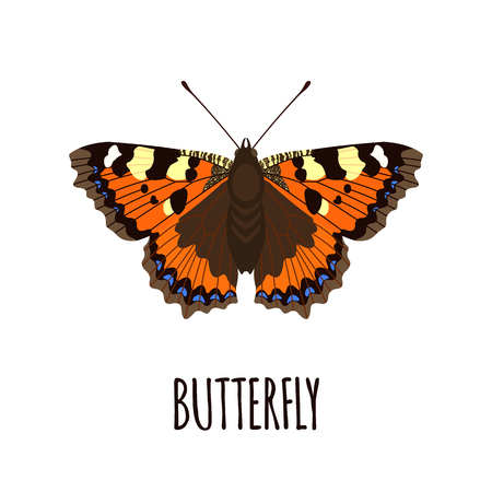 Realistic butterfly in flat style.  Butterfly isolated on white background. Vector illustration Illustration