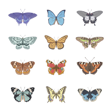 tenderness: Set of realistic tenderness butterflies. Butterfly isolated on white background. Colorful pastel butterfly. Vector illustration