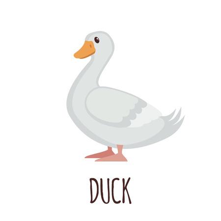 squeak: Cute Duck in flat style isolated on white background. Vector illustration. Farm bird icon. Cartoon Duck. Illustration
