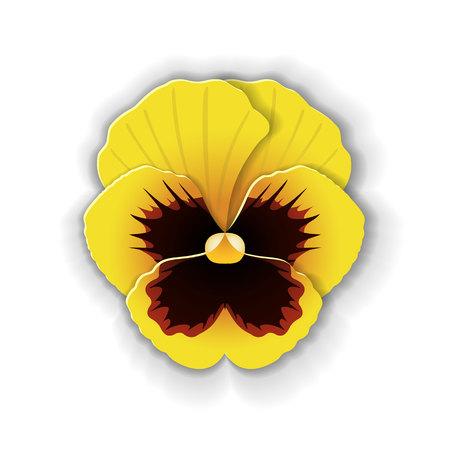 Nette Pansy Blume in Papier Kunst Stil isoliert auf weißem Hintergrund. Origami-Stil. Vektor-Illustration. Standard-Bild - 77997300