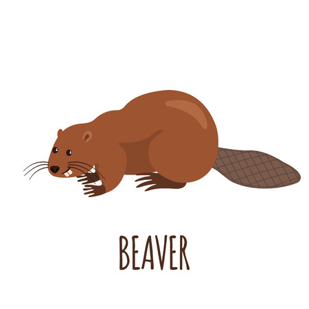 Cute beaver in flat style isolated on white background. Vector illustration. Forest animal. Cartoon beaver. 矢量图像