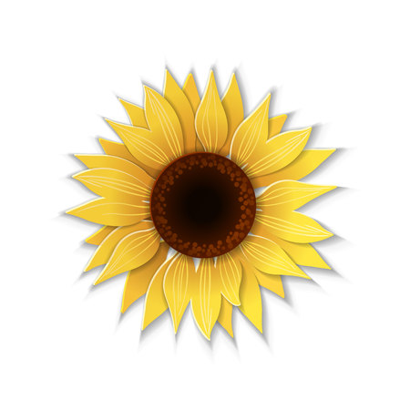 Cute sunflower flower in paper art style isolated on white background. Vector illustration.