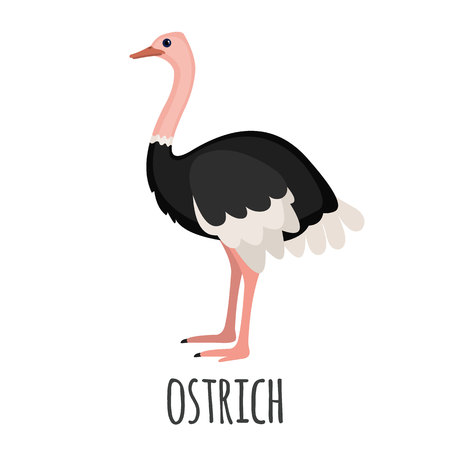 Cute Ostrich in flat style isolated on white background. Vector illustration. Cartoon ostrich. African zoo animal. Illustration