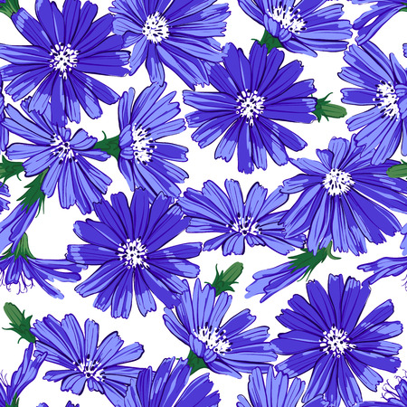 Floral seamless pattern with chicory.