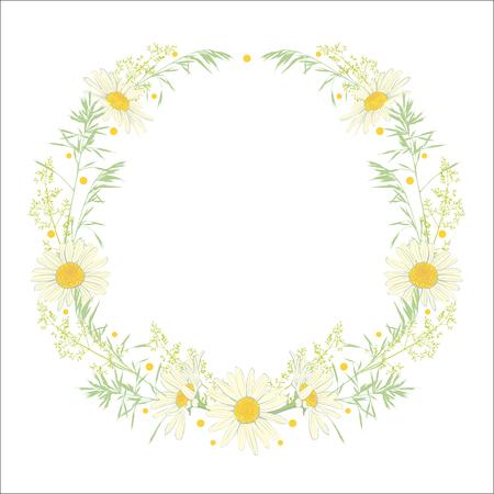 Corona dibujada a mano con manzanilla y hierbas aisladas sobre fondo blanco. Marco de decoración de primavera verano. Ilustración vectorial Elemento de diseño para invitaciones, tarjetas de felicitación, cosméticos y otros. Ilustración de vector