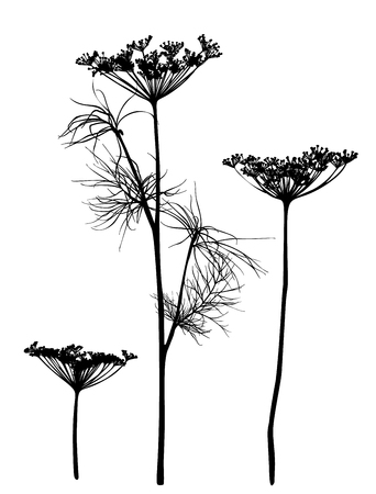 Hand drawn set of dill silhouettes isolated on white background. Botanical element for design. Vector illustration. Vettoriali