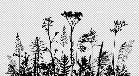 Wild herbs and flowers silhouettes isolated on transparent background. Meadow grass composition. Summer concept. Vector illustration. Çizim