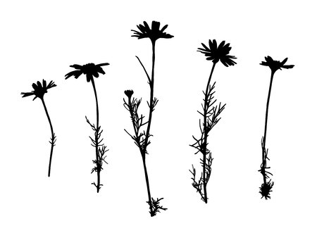 Camomile flower silhouettes isolated on white background.