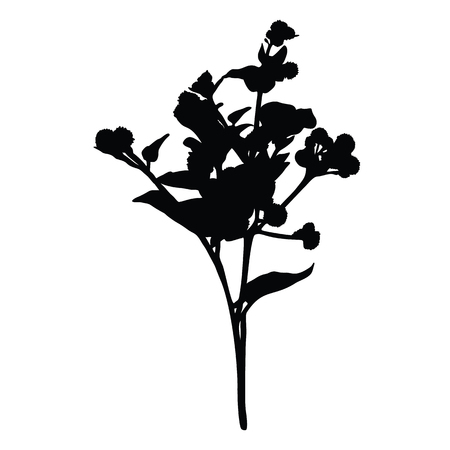 Burdock silhouette isolated on white background 向量圖像