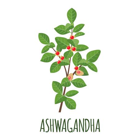 Vector de Ashwagandha en objeto aislado de estilo plano. Hierba medicinal superalimento ashwagandha. Ilustración de vector.