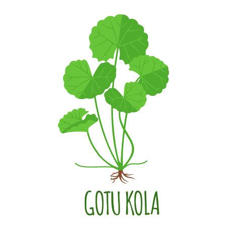 Gotu Kola vector in flat style. Isolated object. Superfood Gotu Kola medical herb. Vector illustration.