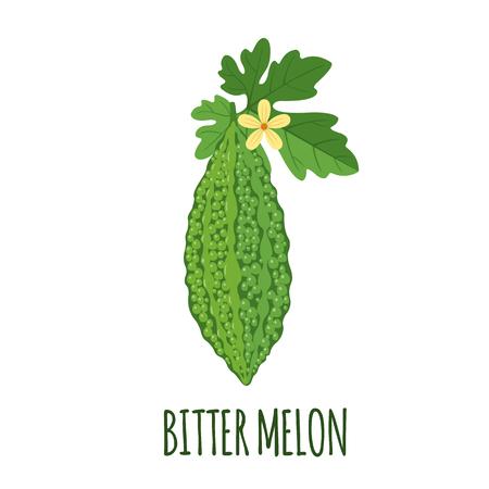 Vector de melón amargo en estilo plano. Objeto aislado. Fruta médica de melón amargo superalimento. Ilustración vectorial.