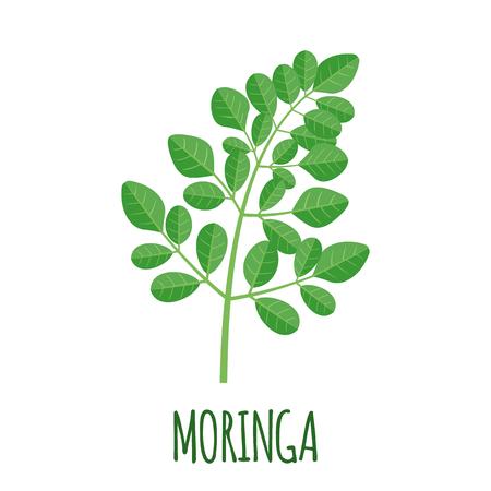 Moringa vector in flat style. Isolated object. Superfood moringa medical fruit. Vector illustration. Vettoriali
