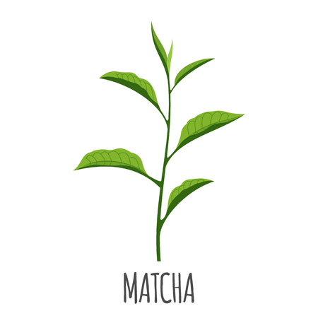 Matcha vector in flat style. Isolated object. Superfood matcha medical tea. Vector illustration. Ilustração