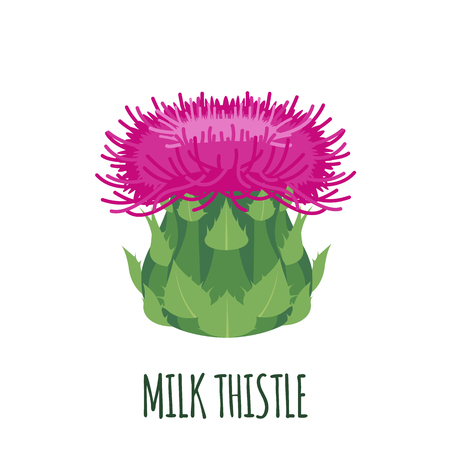 Milk Thistle flower icon in flat style isolated on white background. Superfood thistle medical herb. Vector illustration. Vector Illustration