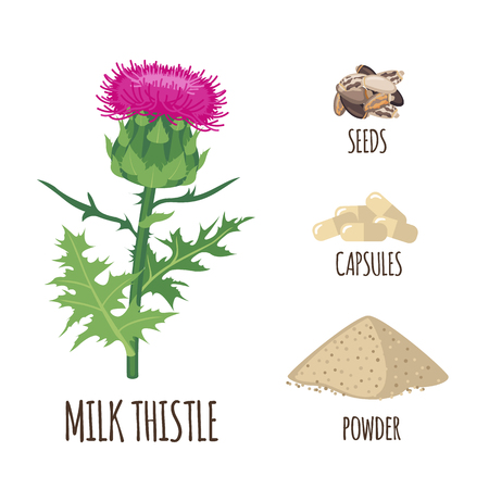 Milk thisyle set with powder, seeds and capsules in flat style isolated on white background. Organic healthy food. Medicinal herbs collection. Vector illustration.