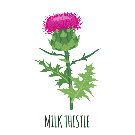 Milk Thistle flower icon in flat style isolated on white background. Superfood thistle medical herb. Vector illustration. Illustration