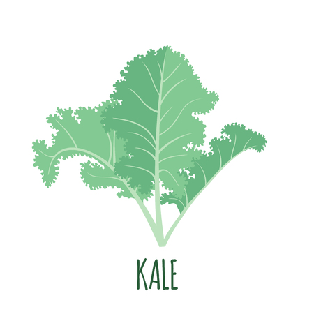 Kale icon in flat style isolated on white background. Superfood kale medical vegetable. Vector illustration.