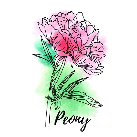Decorative watercolor peony isolated on white background. Cute flower for your design. Vector illustration. Illustration