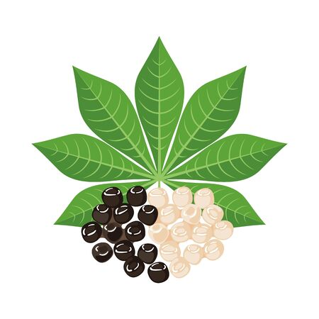 Black and white Tapioca with cassava leaf in flat style isolated on white background. Vector illustration.