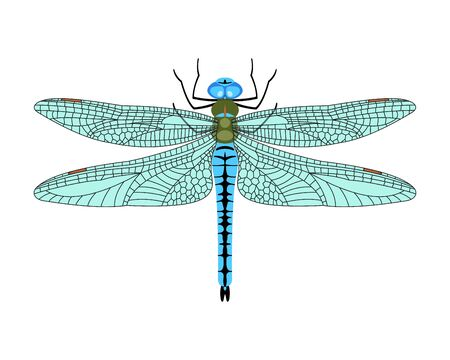Dragonfly icon in flat style isolated on white background. Design element for print templates, websites, web and mobile phone apps. Vector illustration. Vettoriali