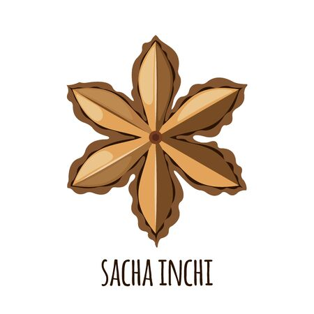 Sacha Inchi vector icon in flat style isolated on white background. Superfood sacha inchi fruit. Organic healthy dietary supplement. Vector illustration.