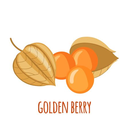 Golden Berry or Physalis vector icon in flat style isolated on white background. Superfood Golden Berry or Physalis fruit. Organic healthy dietary supplement. Vector illustration. Illusztráció