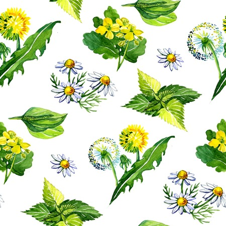 Watercolor medicinal plants 3