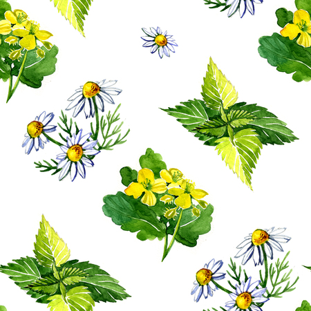 nettle: Watercolor medicinal plants 2 Stock Photo