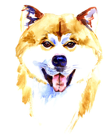 akita: Watercolor Akita inu dog on white background