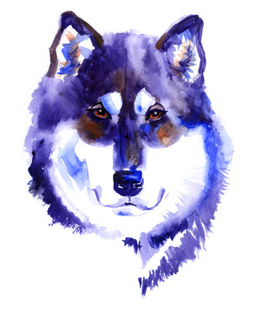 alaskan malamute: Watercolor Alaskan malamute dog on white background