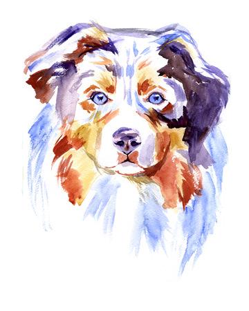 白い背景の水彩画のオーストラリアン シェパードの犬 写真素材 - 55143879