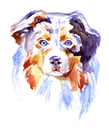 Watercolor Australian shepherd dog on white background