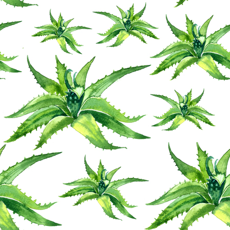 aloe: Watercolor summer insulated aloe vera pattern on white background
