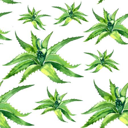 aloe vera: Watercolor summer insulated aloe vera pattern on white background