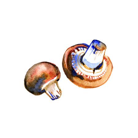 champignon: Watercolor summer insulated mushrooms champignon on white background