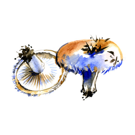 lactarius: Watercolor summer insulated mushrooms Lactarius resimus on white background Stock Photo