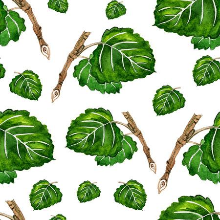 aspen: watercolor aspen Botanical pattern on a white background Stock Photo