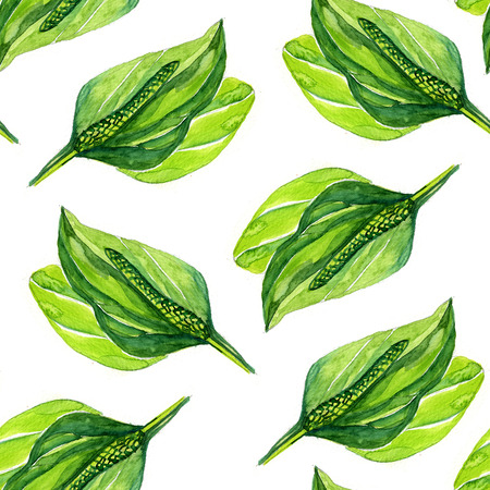 plantain: watercolor plantain Botanical pattern on a white background