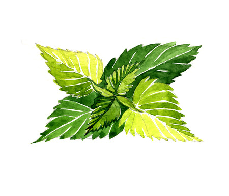 Watercolor summer insulated nettle on white background Banco de Imagens