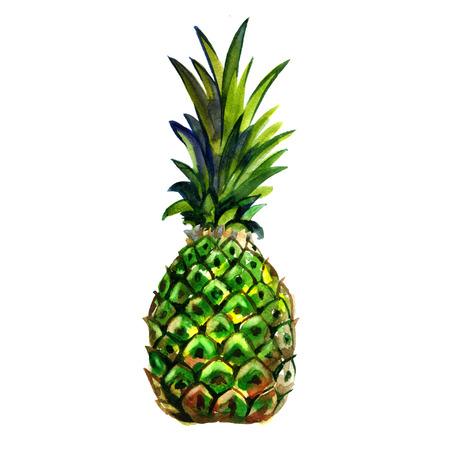 Waterverf zomergroene ananas op een witte achtergrond