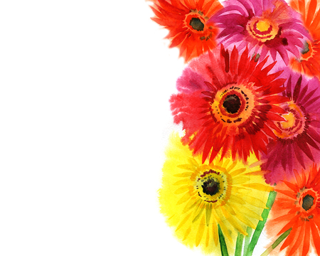 gerbera daisies: summer watercolor colored gerbera daisies on a white background